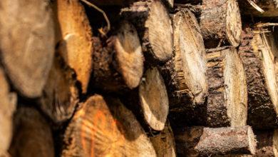 Scorecard Ranks US Retailers on Sustainably Produced Wood Furniture