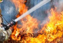 Virginia Warns of Dangerous Wildfires with Smokey Bear Awareness Month